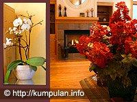 Percantik Ruangan dengan Tanaman Indoor