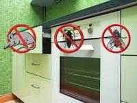 Membasmi Lalat, Kecoa dan Tikus dari Dapur